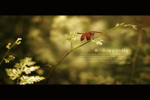 A Dragonfly by yudi80