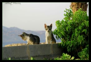 friendly kitties by ShlomitMessica