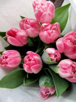 pink tulips by youliouza