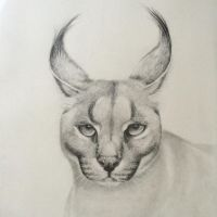 Caracal by sindisj