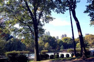 Central Park. 6 by xxzimmer483xx