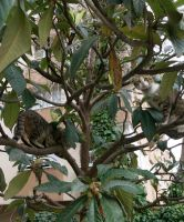 two cats in a tree by contemporaryhart