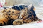A Calming Nap by HrWPhotography