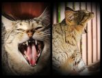 Roaring With Laughter by TeaPhotography