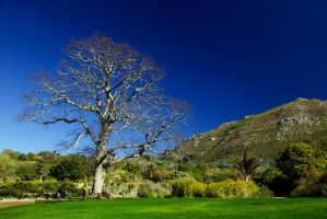 Kirstenbosch Garden by parallel-pam