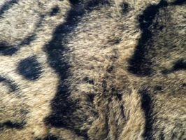 2014 - Clouded leopard fur by Lena-Panthera