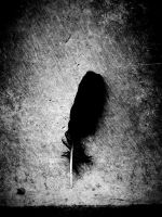 feather   on ground by pickerel