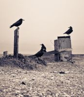 Four Crows by Rustyoldtown
