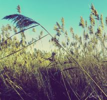 Reed by Lusiozo