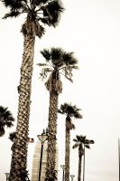 Palm Pacific by thexlookingxglass
