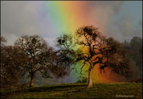 Rainbow Oaktree wall by kayaksailor