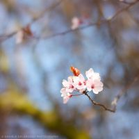 Branch Out by dandelgrosso