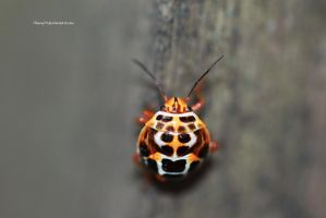 Ladybird by Aheng711