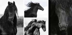 Friesian boys by DenisaKc