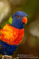 Lorikeet Profile by Shadow-and-Flame-86