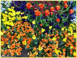 Mainau flowers II by acoresjo88