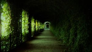 Path in Vienna by SirThomb