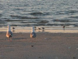 birds of the beach by SumYungGa1