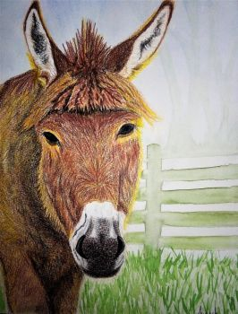 Bluto the rescue Donkey by Supach