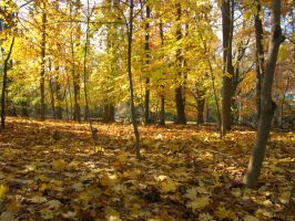Autumn Forest 2 by bean-stock