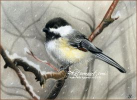 Winter bird by Katerina-Art