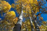 Fall Colors, Take II by Scooby777