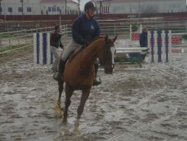 Chestnut Galloping UnderSaddle by rachellafranchistock