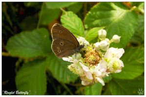 Ringlet Butterfly (12.07.13) by LacedShadowDiamond