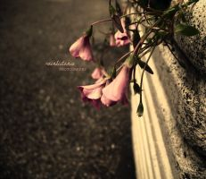 Broken Dreams by RainDistance