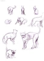 Cat studies II by ASVOD