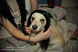 Flapjack in wig by overshined