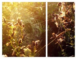 Spiderweb by asyenka
