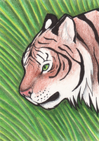 ACEO Tiger Head by Zaphy1415926
