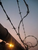Barbed Wire IV by bang--baang