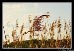 Reed by RottenKidu