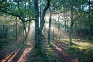 Sunlight Through Trees by SnapDragon75