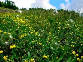 Yellow Flower Bubble Field by FantasyStock