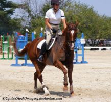 Warmblood 2 by EquineStockImagery