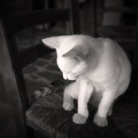 White Cat by Jez92
