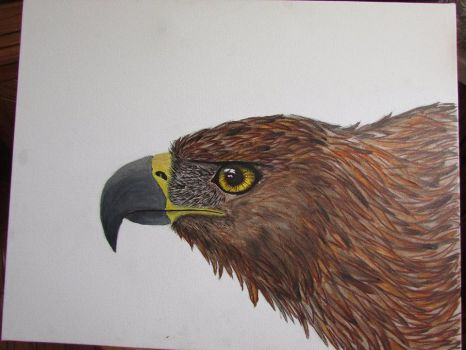 Golden Eagle Step 4 by akyta680