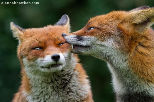 Foxy Kisses 3 by Alannah-Hawker