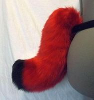 Crimson Red and Black Bobtail (for sale) by AcrotomicStudios