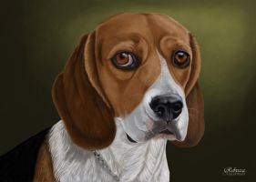 Beagle by petanimalia