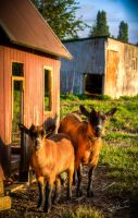 Goats home by David-Turmel