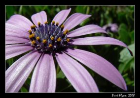 Flower 01 by DarthIndy