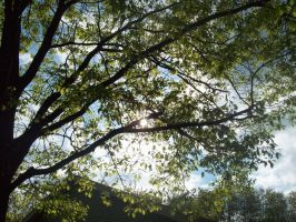 Sunny Trees by icrybehindsunglasses