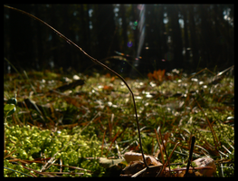 Sun in the forest. by Linek