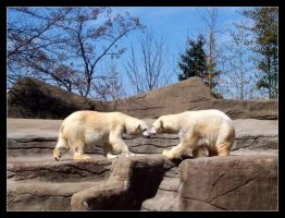 Polar Bear Love by Zephania