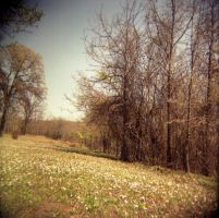 Clearing-Holga by effing-stock