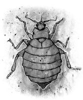 Bedbug... again by opteryx